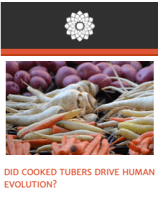 Essay: Did Cooked Tubers Drive Human Evolution? (click to read)